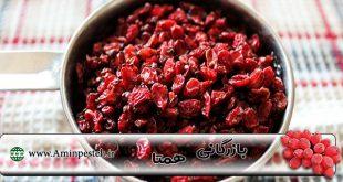 فروش زرشک در مشهد