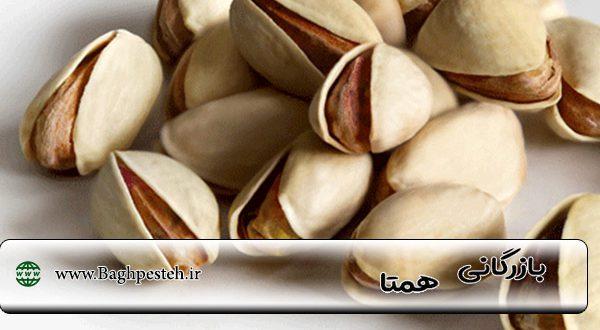 صادرات پسته احمد آقایی