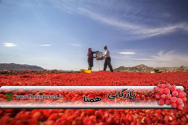 قیمت روز زرشک خشک