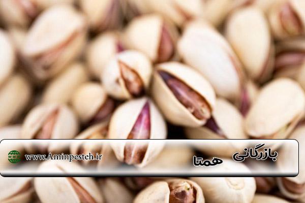 قیمت پسته صادراتی احمد آقایی