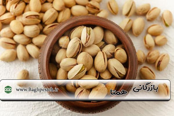 قیمت خرید پسته از کشاورز